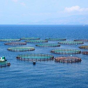 Image aquaculture crop thumb 2x