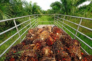 Image palm oil dreamstimexs30816056 thumb 2x