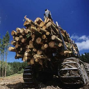 Image logging thumb 2x