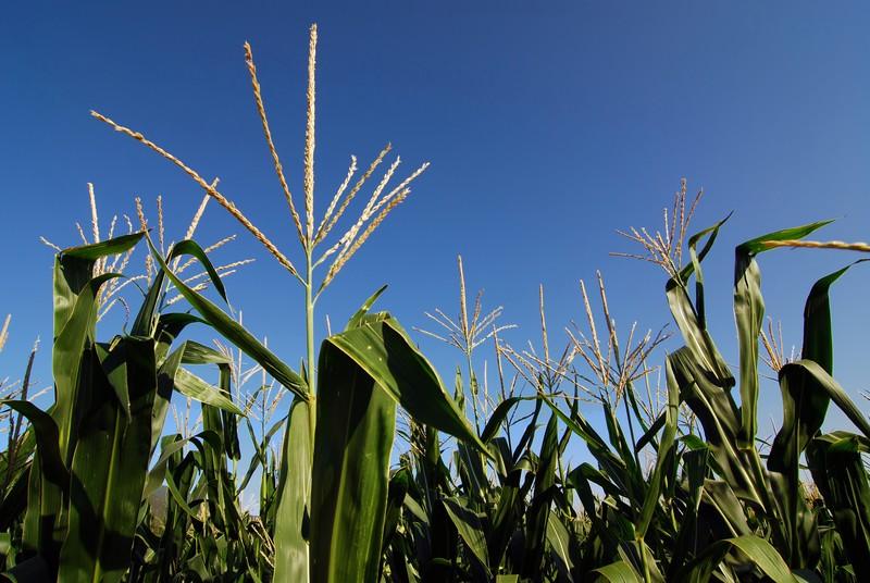 Image biofuels