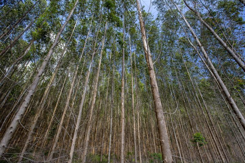 Image tree plantation dreamstime s 138214357