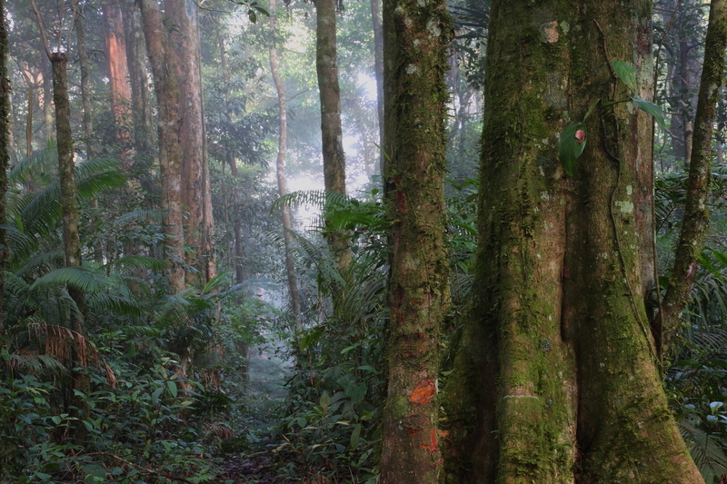 Image sumatra dreamstime s 70965562