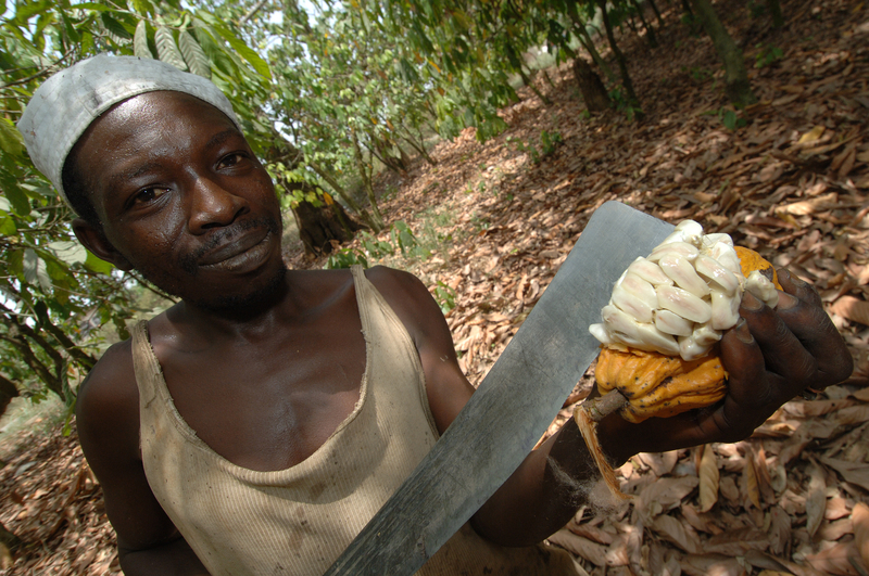 Image cocoa farmer dreamstime s 7548873