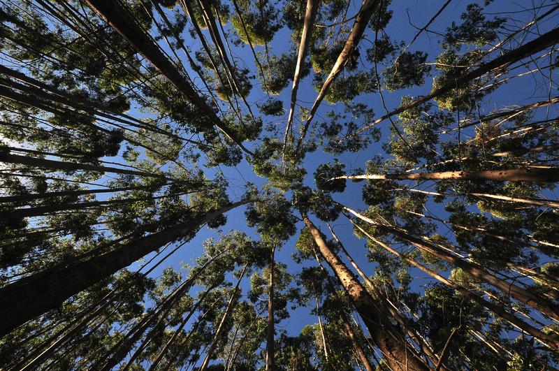 Image forest dreamstime s 45212891