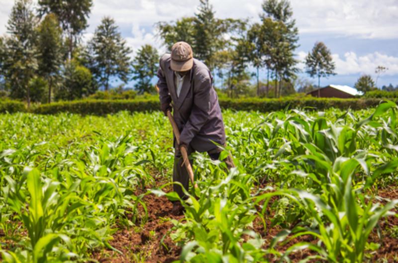 Image kenyan farmer dreamstime xs 54386789
