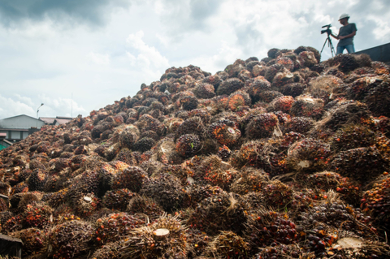 Image palm oil dreamstime xs 100440640