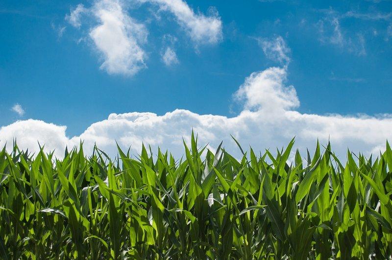 Image corn field 440338 1920
