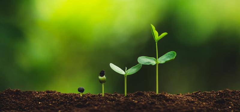 Image tree planting dreamstime s 129808744