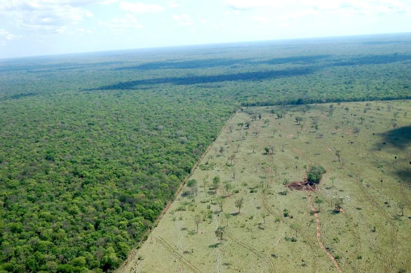 Image deforestation dreamstime 11317437