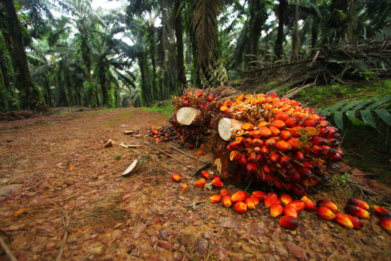 Image palmoil  scaled dreamstime s 20206785